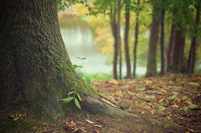 Lire la suite de l'actualité Ouverture des forêts